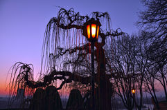 The burning lantern and the silhouette of a tree at dusk. Stock Photos
