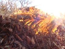 burning leafs Flammor, grå aska och vit rök arkivbild