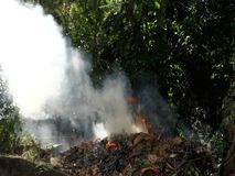 Burning leaves in the tropics. A fire blazing in a bushy garden in the caribbean stock video footage