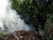 Burning leaves in the tropics. A smoky blaze in a bushy garden in the caribbean stock video footage