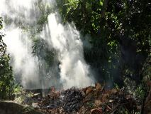 Burning leaves in the tropics. A smoky blaze in a bushy garden in the caribbean stock video