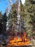 Burning Log Royalty Free Stock Image
