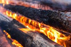 Burning logs in the bonfire Stock Photo