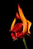Burning love royalty free stock photo