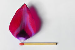 Burning match from tulip leaf Royalty Free Stock Photos