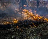 Burning nature Royalty Free Stock Photo