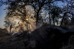 Burning nature Stock Photo