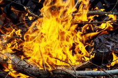 Free Burning Of Thin Dry Grass During Incendiary Fire, Close-up Royalty Free Stock Image - 108669366