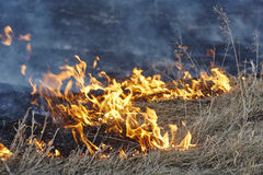 Burning old grass on field close up Royalty Free Stock Image