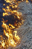 Burning old grass on field close up Royalty Free Stock Images