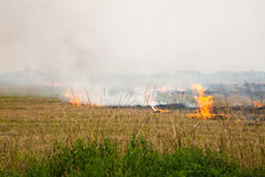 Burning paddy fields Stock Photo