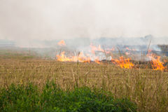 Burning paddy fields Stock Images