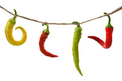 Burning pepper chili on rope Stock Images