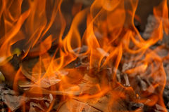 Burning phony money Royalty Free Stock Photo