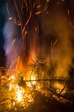 Burning Pine Branches Night Campfire. Flying Sparks Flame and Smoke stock images