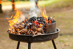 Burning pine cones Royalty Free Stock Photos