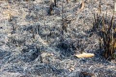 Burning of plantation area Stock Image