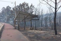 Burning português da floresta Imagem de Stock