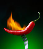 Burning red chili pepper Stock Image