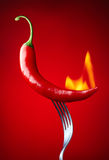 Burning red chili pepper Stock Images