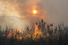 Burning reeds Royalty Free Stock Photo