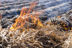 Burning of remains in agricultural cultivation Stock Image
