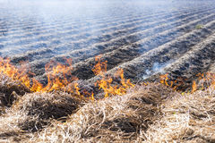 Burning of remains in agricultural cultivation Royalty Free Stock Image