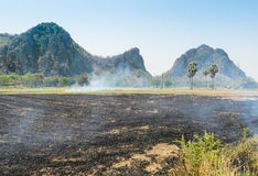 Burning rice field Royalty Free Stock Images