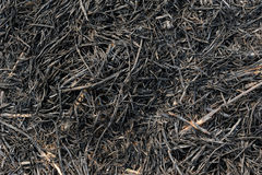 Burning rice straw Royalty Free Stock Photography