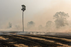 Burning rice straw Royalty Free Stock Photography