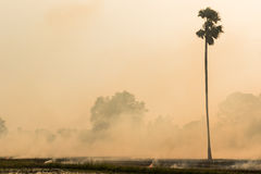 Burning rice straw Stock Photo
