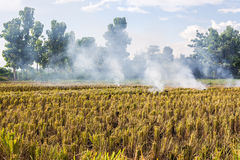 Burning of rice stubble burning straw in rice farmers in Thailan. D Royalty Free Stock Images