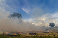 Burning rice stubble. Stubble and straw harvesting of paddy is about to be burned soon Royalty Free Stock Photography