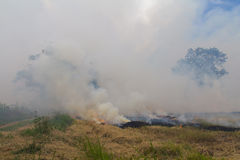 Burning rice stubble. Stubble and straw harvesting of paddy is about to be burned soon Stock Images