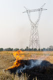 Burning rice stubble Royalty Free Stock Photo