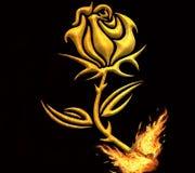 Burning Rose Stock Image