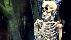 Burning Skeleton. Human Skeleton Burning in the Forest. Halloween Background - HD Video stock video footage