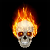 Burning skull. In hot flame. Illustration on black background Royalty Free Stock Photo