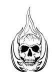 Burning skull Stock Image