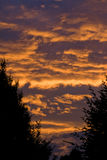 Burning sky. Deep red clouded sky between dark trees. A very compelling scene Stock Image