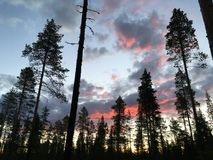 Burning sky, sunrise and forests in Sweden. North of Sweden. Daylight day around called midnight sun Stock Photos