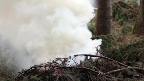 Burning spruce branches and rising smoke. stock video footage