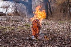 Burning spruce tree Stock Photo