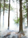 Burning Straw. In the area of land where the pine tree are thick royalty free stock image