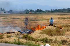 Burning straw. Farmers burning straw on the countryside stock images