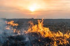 Burning of straw Stock Photos