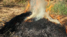 Burning of straw stock video footage