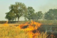 Burning the stubble. Fire in the farmer field: burning the stubble Royalty Free Stock Images