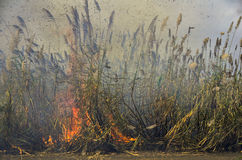 Burning of sugar cane fields in Mauritius Royalty Free Stock Photos