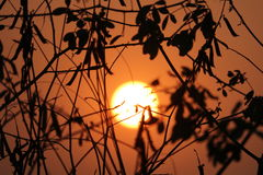 Burning Sun. Burning Cold sun at time of Set down Royalty Free Stock Photography